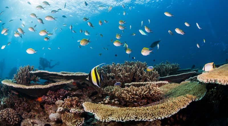 Tauchasflug auf den Malediven