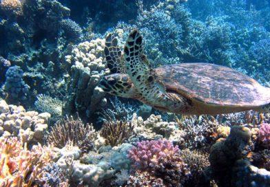Tauchen auf Bali: traumhafte Tauchreviere in faszinierender Unterwasserwelt