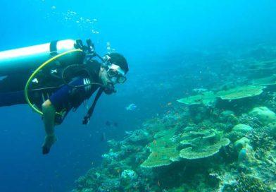 Malediven – Tauchen in paradiesischen Unterwasserwelten
