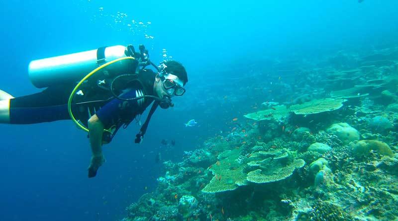 Tauchen auf den Malediven – paradiesische Unterwasserwelten