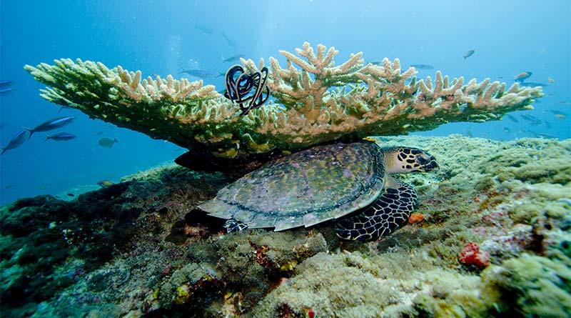 Tauchgang auf den Malediven