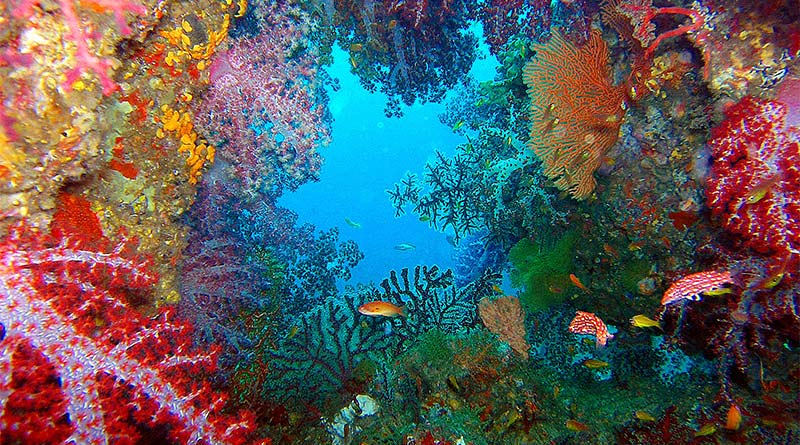 Tauchen in Thailand: Unterwasserwelt